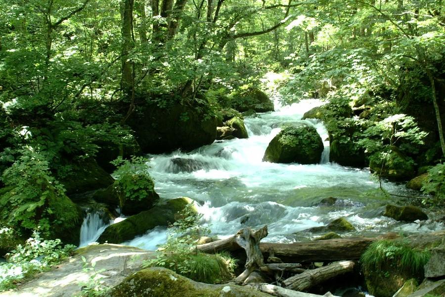 奥入瀬渓流で目を休めて